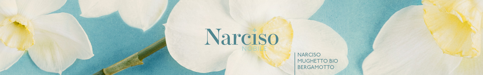Narciso-Nobile