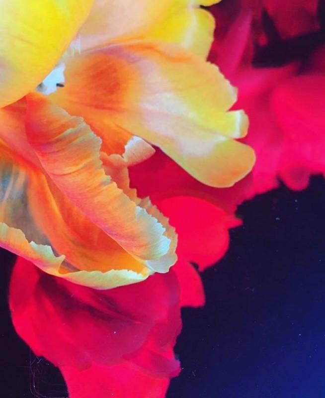 media/image/OZN-Tulpen.jpg